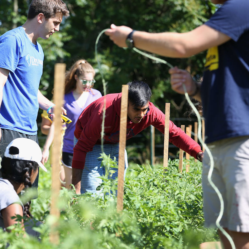 PSSI interns volunteer at The Wittel Farm in Elizabethtown, PA, to harvest food for hungry people in Lancaster County.