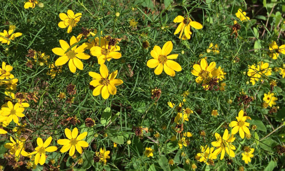 Sustainability Center Native Pollinator Garden