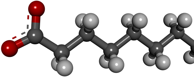 A ball-and-stick model of a fatty acid generated with Discovery Studio.
