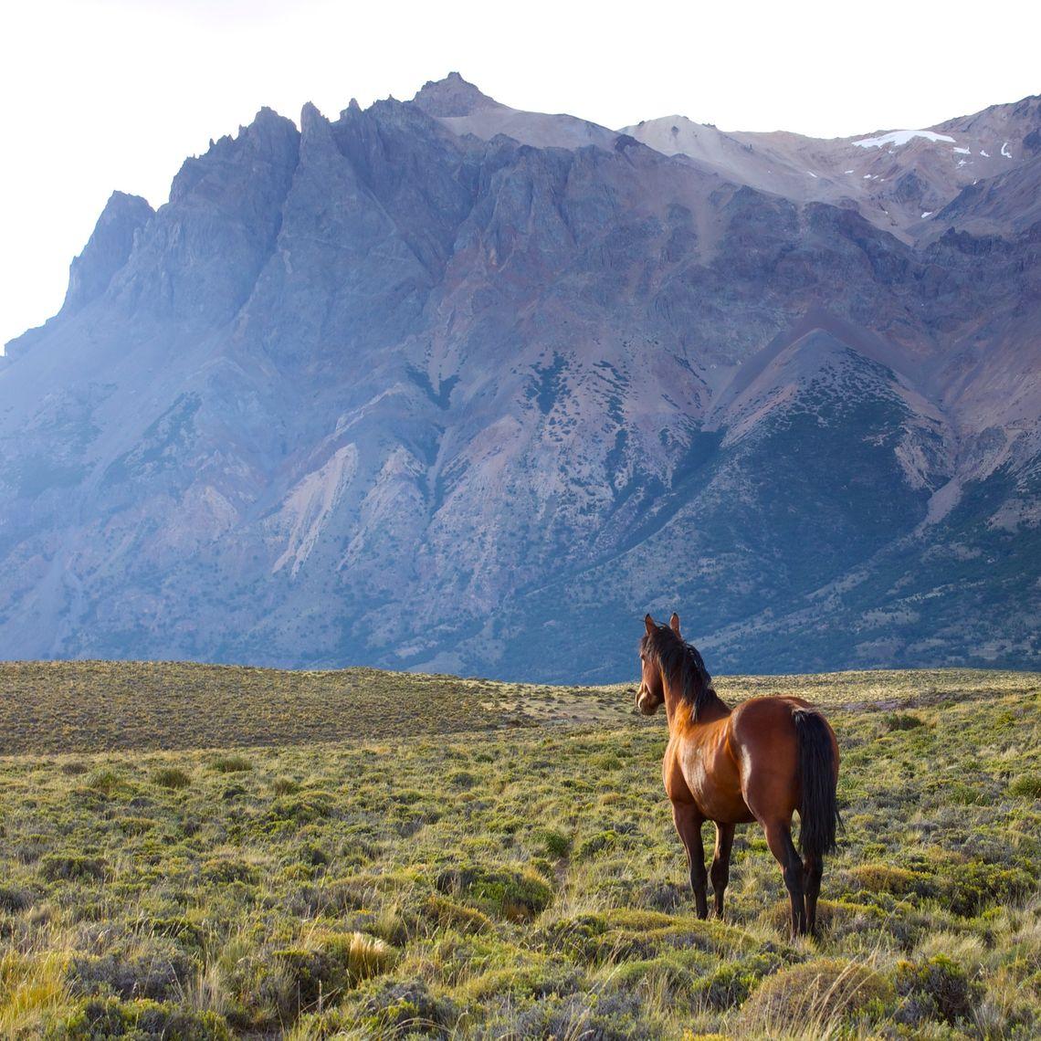 Shelby Sawyer OCS Patagonia 8