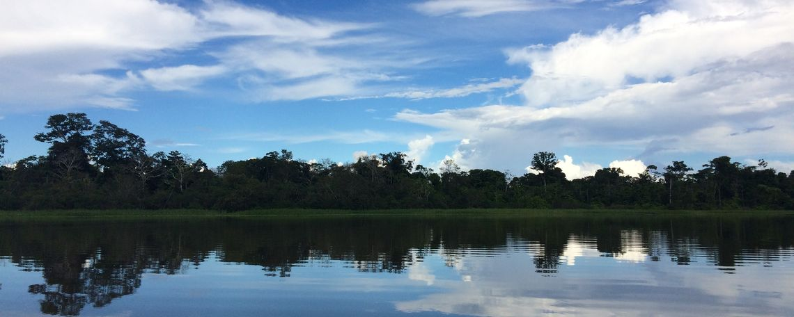 The Amazonian river basis