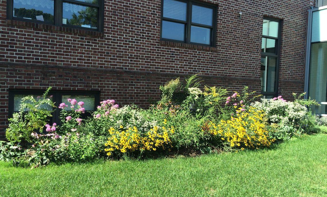 Brooks Native Pollinator Garden