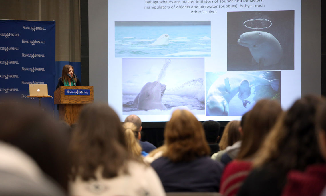 "Beluga whales are masterful imitators of sounds and behaviors. ""They're very cheeky,"" Marino said."