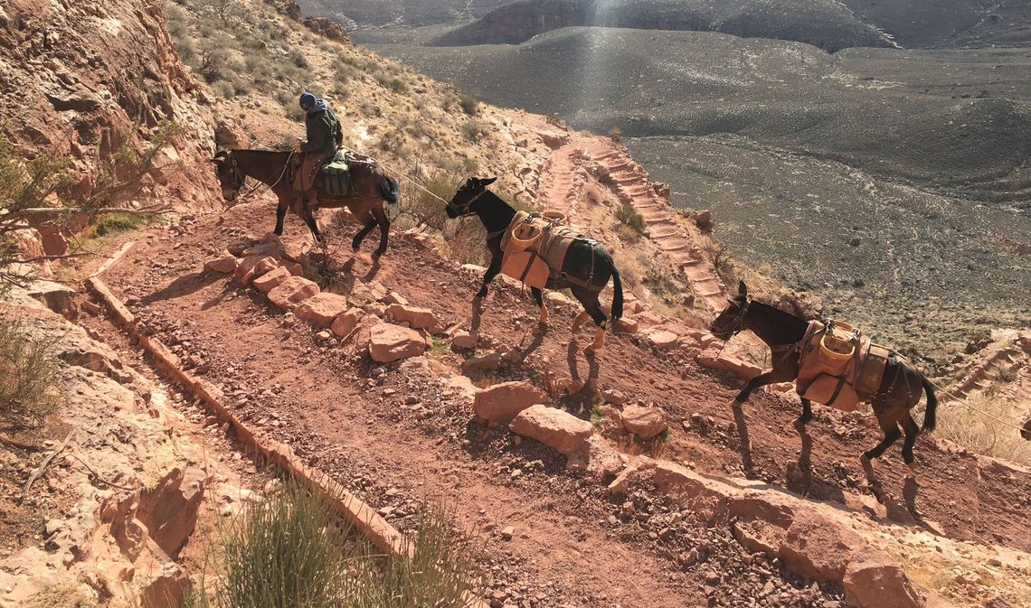 Mule train on the South Kaibab trail.