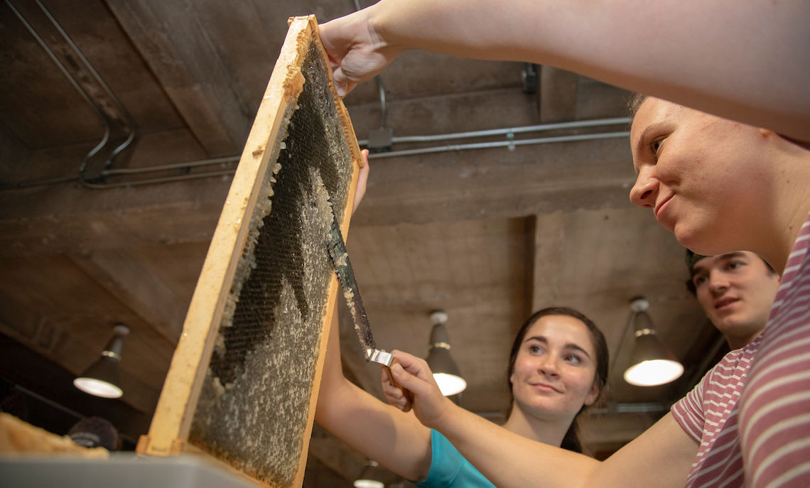 """Students use sharp knives to """"uncap"""" the honeycombs by removing …"""