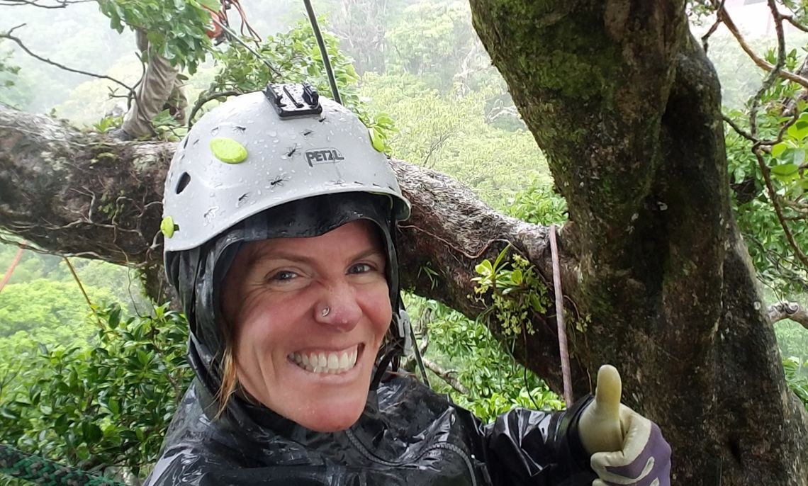 Gotsch and Koomjian collect epiphyte samples in a tree as a rain storm catches them.