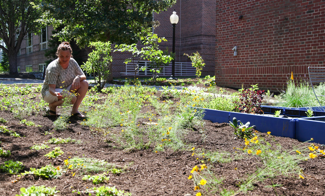 Sarah Dawson inspects the Golden Ragwort and other new plantings for a garden that is designed to attract pollinators as well as provide a laboratory for student research.