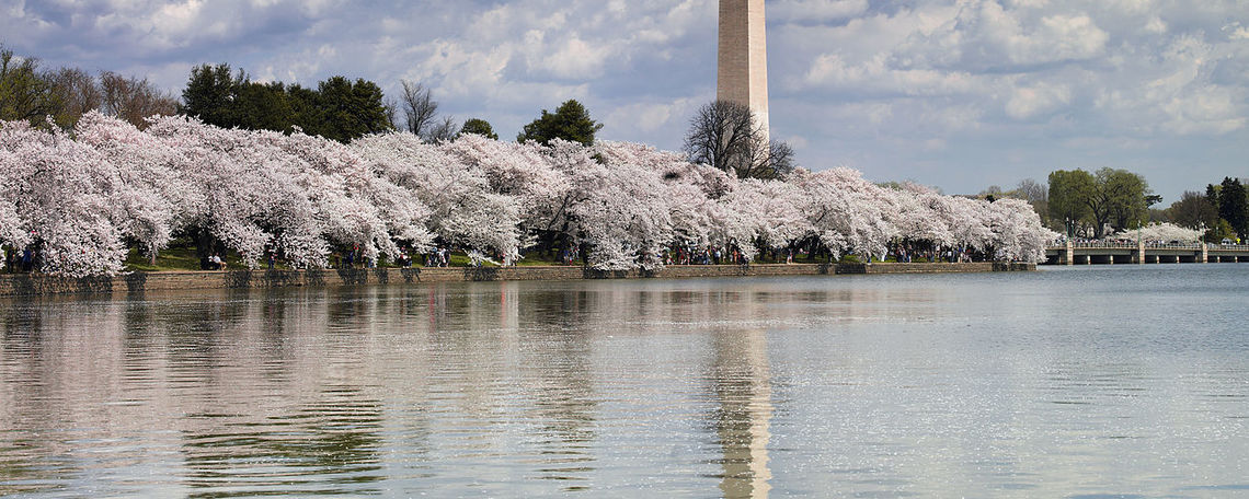 The Washington Monument in spring time.