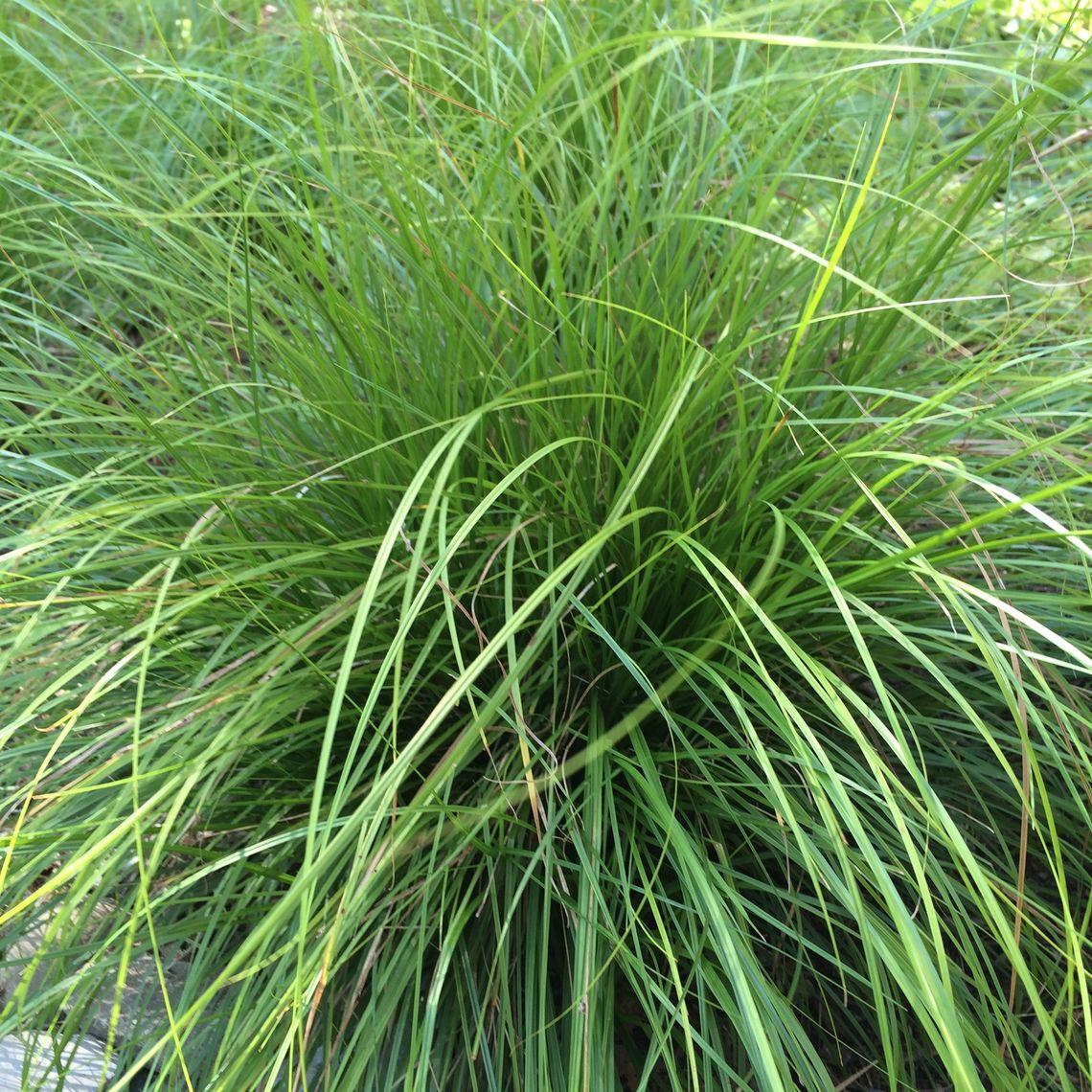 Native Pa Plants: Franklin & Marshall