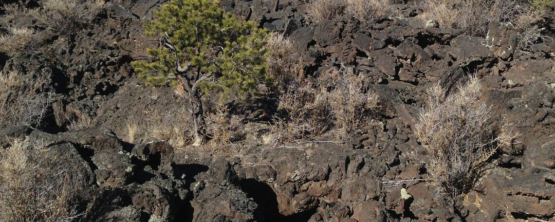 A volcanic field in New Mexico's El Malpais National Monument.