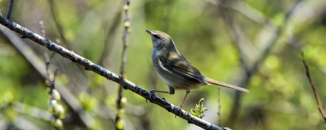 A warbler perched on a branch.