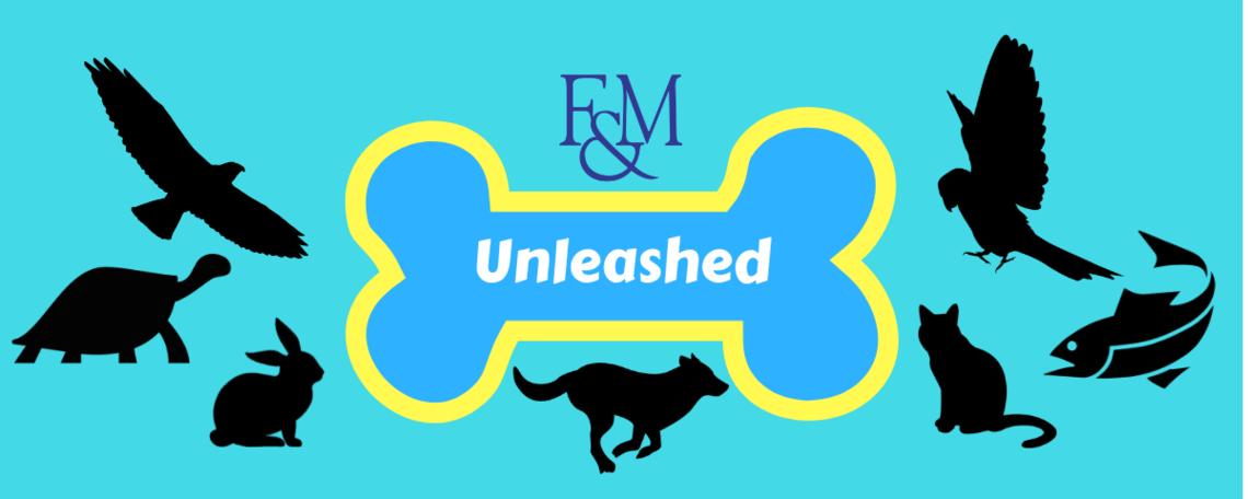 F&M Unleashed