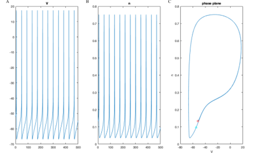 This is Figure 12 from Alexa's final paper for her MAT 390 research project, submitted in May 2020.  The Fitzhugh-Nagumo model is a famous mathematical model of electrical behavior of neurons (voltage versus time).  It is a system of two nonlinear different equations, tracking how voltage (v) and an underlying activation variable (w) change with time.  These are shown in panels A and B of the figure.  C:  A phase portrait, showing each datapoint from panels A and B as the values of both v and w at a particular time.
