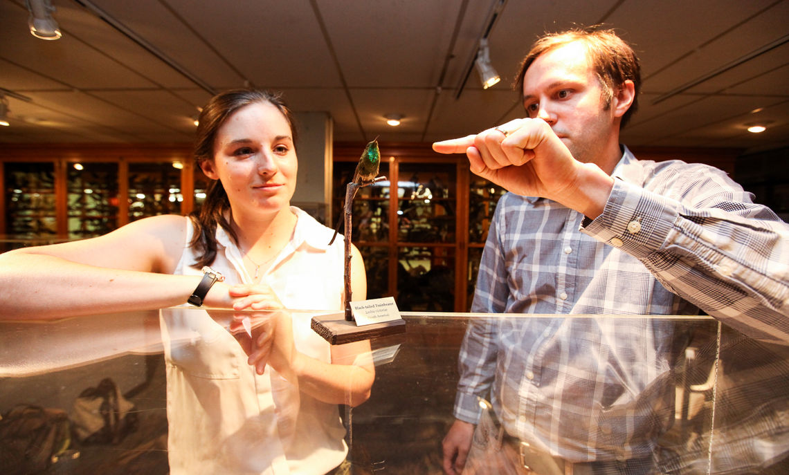 Inside the North Museum, Professor Anderson shows Larissa Kehne the black-tailed trainbearer's iridescent patch on the gorget.