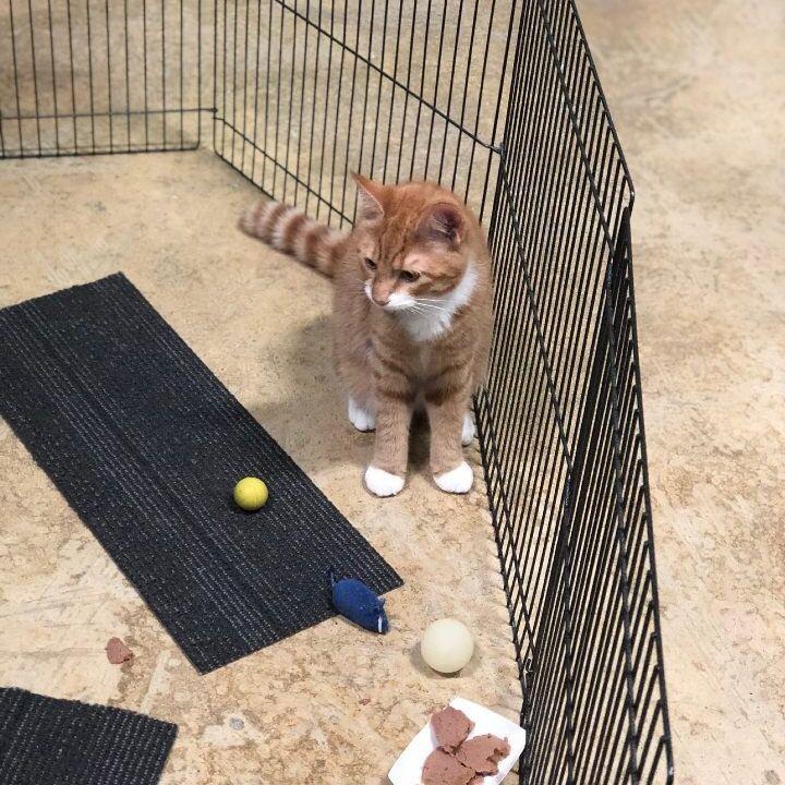 centerville pet rescue