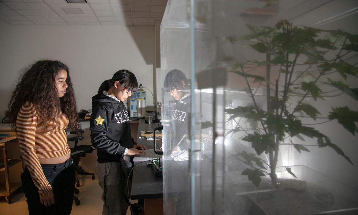 For their research, Liu and Medina grow small trees in the Steinman Plant Growth Facility on campus and collect samples of bark and twigs from mature and young trees in Lancaster.