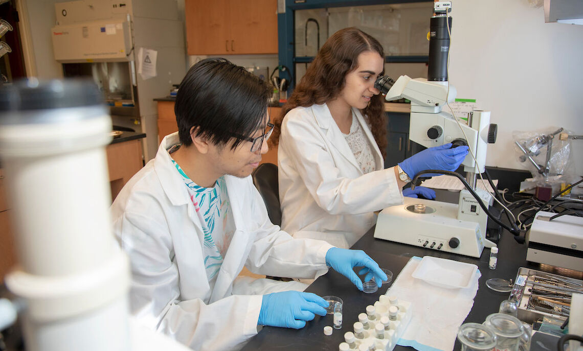 Rising seniors biology majors Thang Ton and Nina Dashti-Gibson are examining mouse models to understand when Down syndrome occurs in physical development.