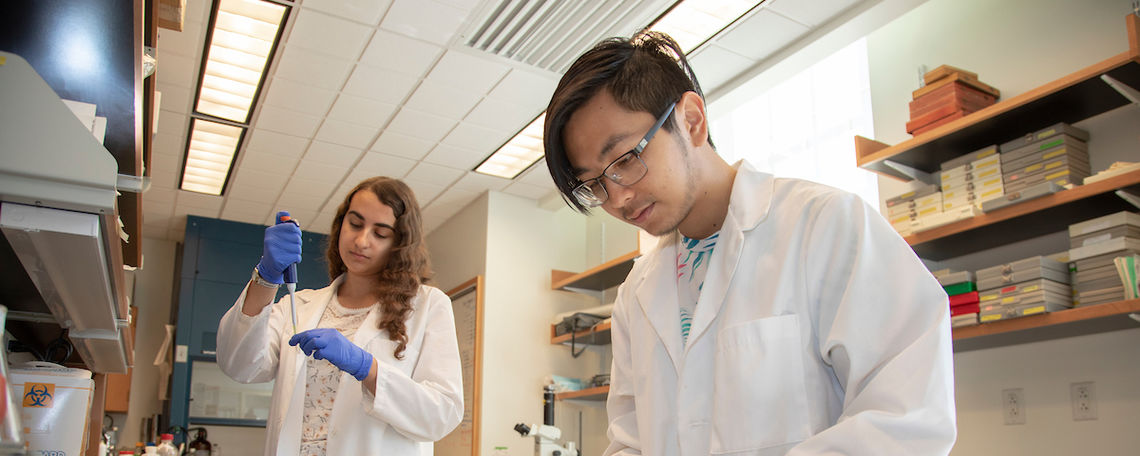 Biology majors Nina Dashti-Gibson and Thang Ton working on a Hackman Scholar research project that involves the skeletal development and immune function in mouse models for Down syndrome.