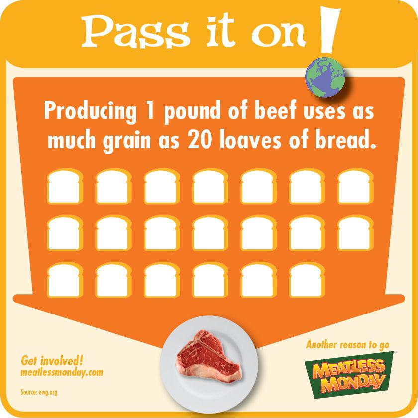 Producing Beef - Grain
