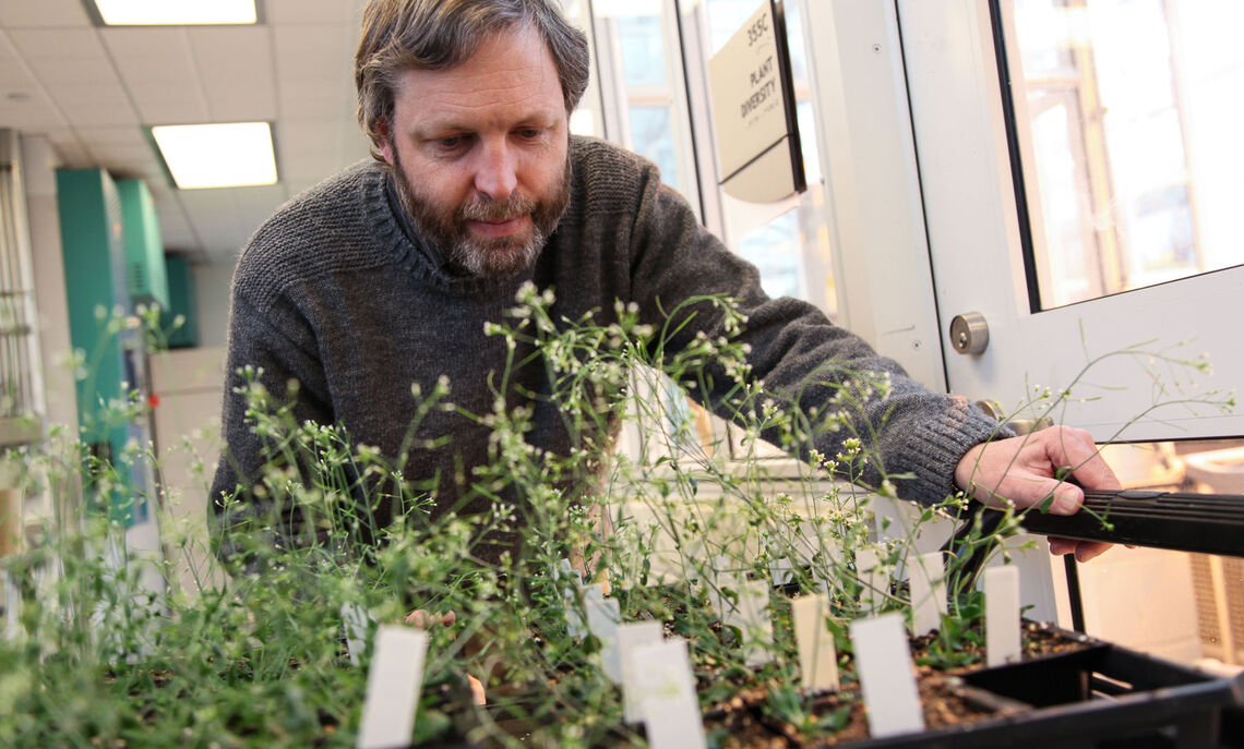 Professor Jenik said his project would examine the mechanisms the seeds use to accumulate nutrients that the seedling will use after germination.