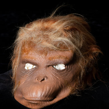 """One of the most famous items in F&M's Archives and Special Collections is an artifact from the 1968 film """"Planet of the Apes,"""" directed by renowned alumnus Franklin J. Schaffner '42. This orangutan mask was likely worn by an extra in the movie. It is part of the Franklin J. Schaffner Film Library, a gift of Mrs. Schaffner curated by legendary F&M government professor Sidney Wise."""
