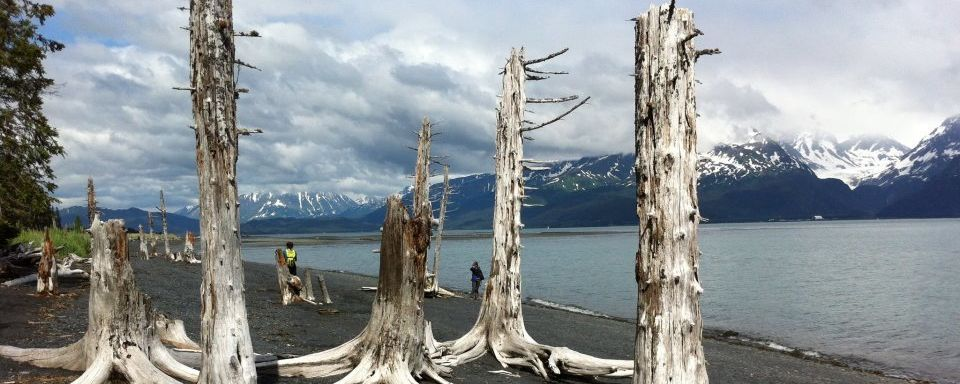 Alaskan Trees