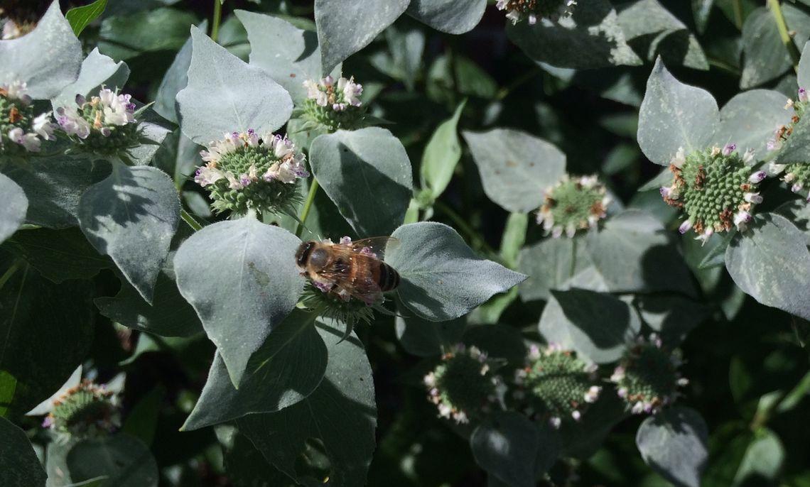 Brooks Native Pollinator Gardens