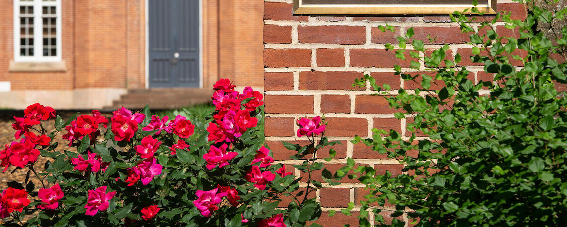 Spring blooms on the F&M campus.