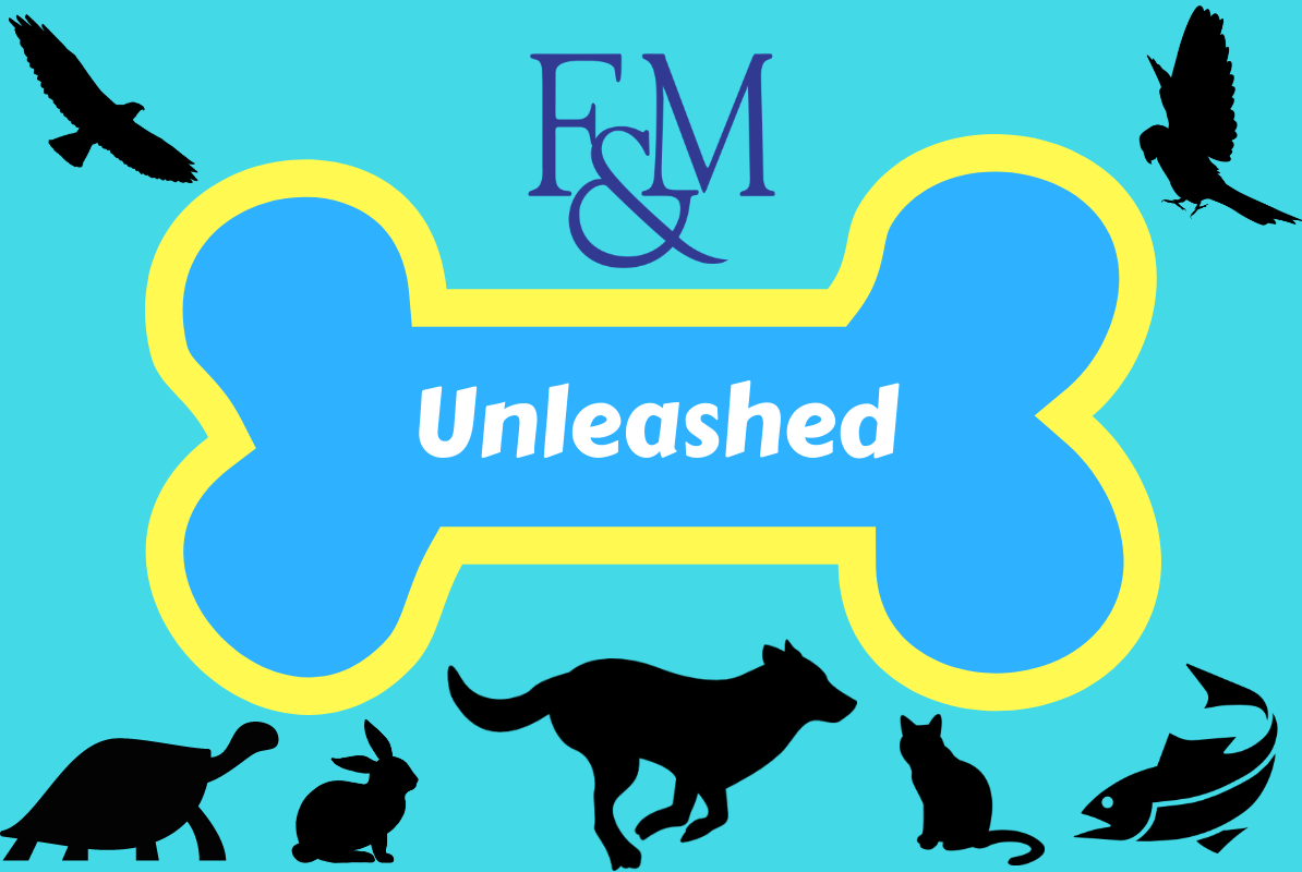 F&M Unleashed Banner