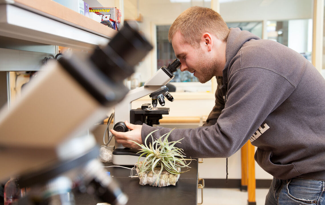 F&M students working with Professor Sybil Gotsch are studying how plants and leaves on the tops of trees take in water. They spent the summer in Costa Rica studying these plants and are also studying them in the greenhouse and lab in the Barshinger Life Sciences and Philosophy building on campus. Pictured is Andrew Glunk '15.