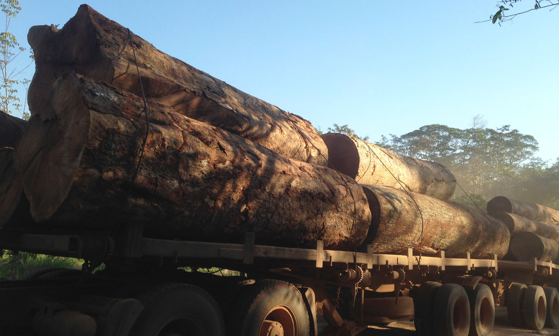 """While working on his research in the Amazon, junior Felipe Storch de Oliveira stays in an """"eco-lodge,"""" where log trucks often passed. He says locals told him the logs came from certified cutting areas in the rainforest. """"That region is well managed by the government, a rarity in the Amazon,"""" says the economics and environmental studies major."""