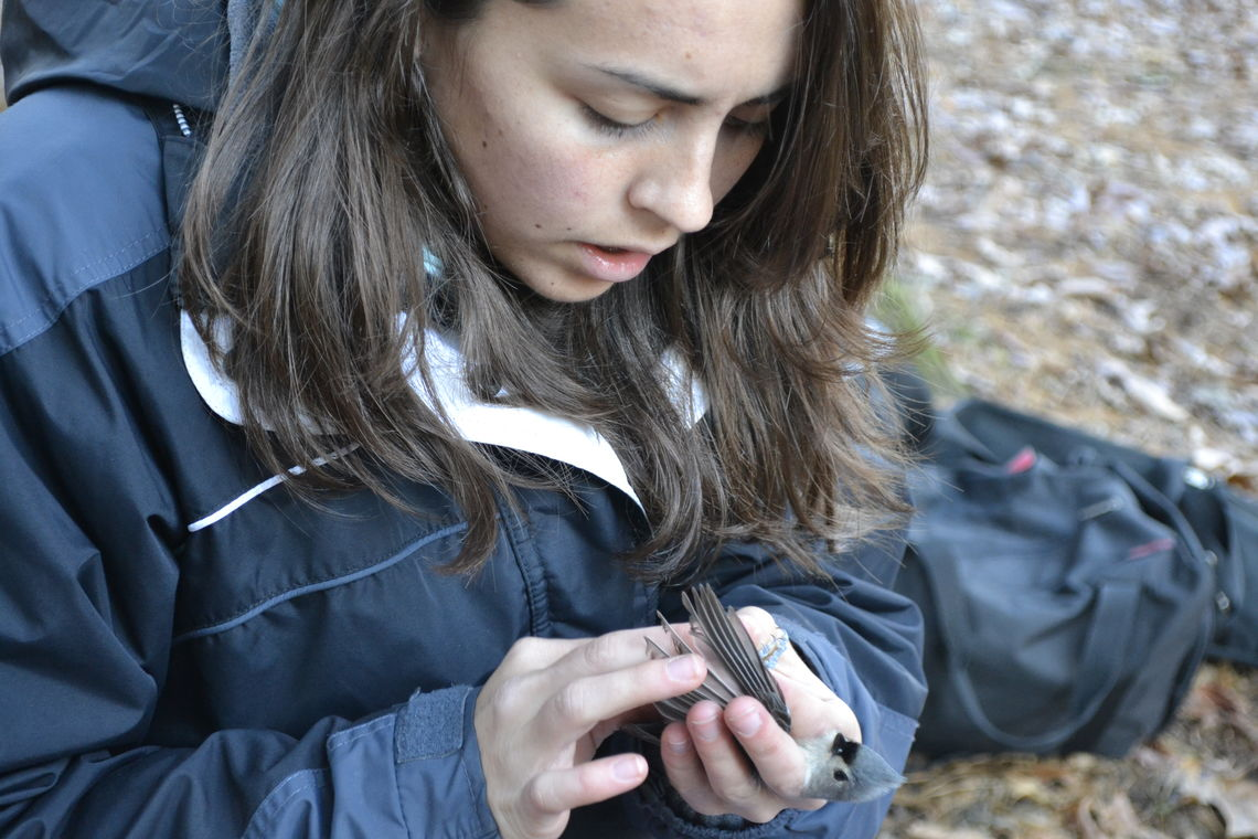 Liz Albright '12 holds a titmouse during a research trip to Millport. (Photo courtesy of Dan Ardia)
