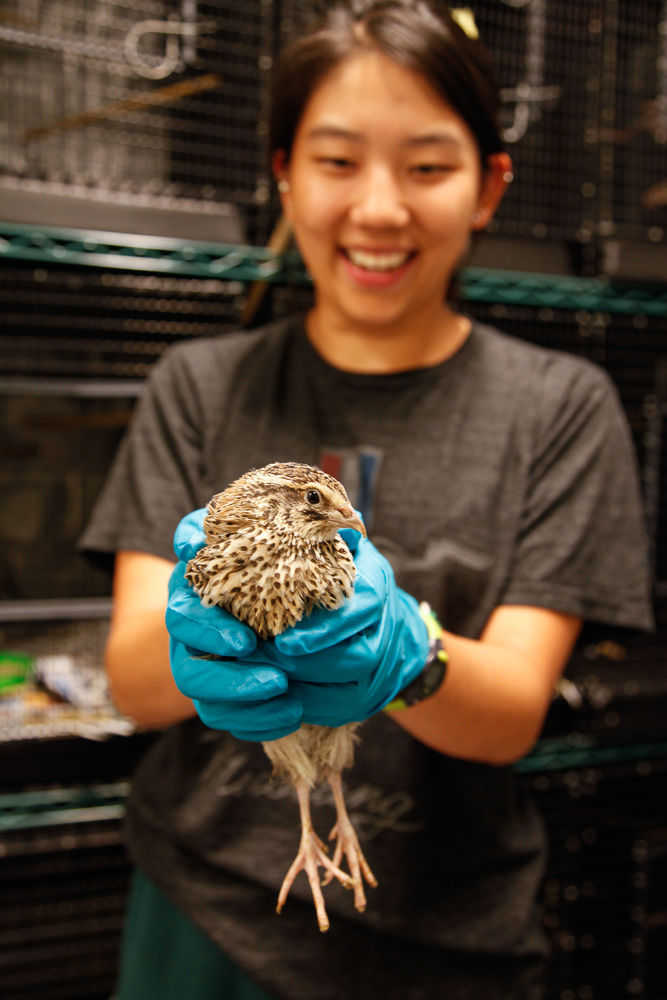 nestling birds summer research project