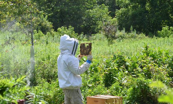 Arlen Ressler tends to the honeybees at Millport. (Photo by Ashley Marsh)