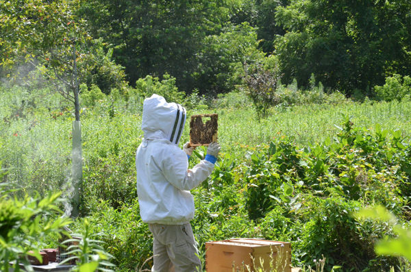 Arlen Ressler tends to the honeybees at Millport. (Photo by Ashley Marsh)