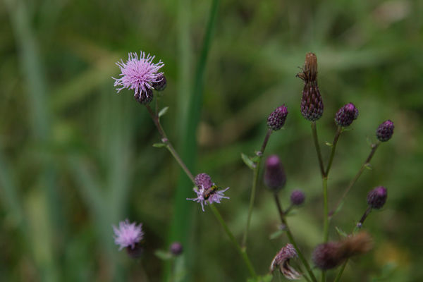 flowers at millport conservancy