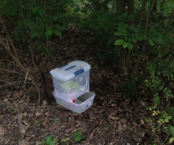 mosquito trap photo 2